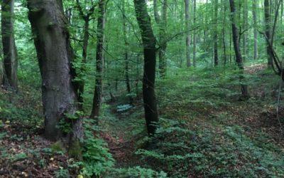 Barangolás az erdőben a testi-lelki egészségért!